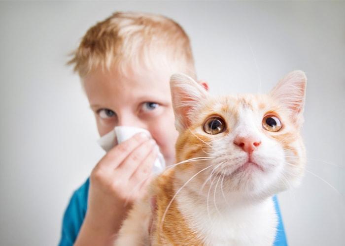 alergia baza wiedzy labhome